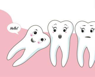 Зубы мудрости — рудимент
